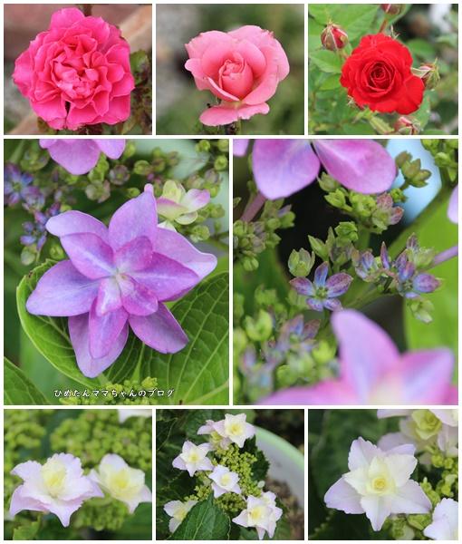 庭の花2019 6月4日