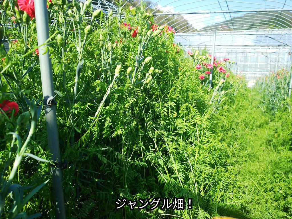 ジャングル畑!