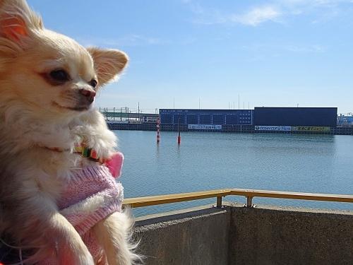 Dogマルシェ inボートレースとこなめ