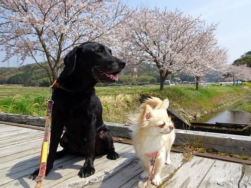 クルミ&柚子