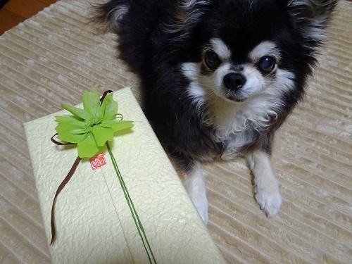 御衣黄開花のお祝いです♪