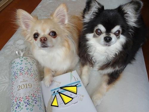 だっちゅさんからプレゼント ♪ナッツ&柚子