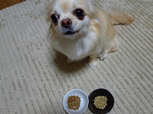 「このこのごはん」食べてみた♪