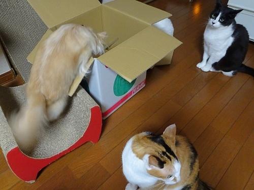 箱が好き♪