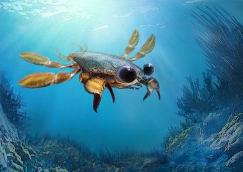 9000万年前、活発に泳いでいたカニがいた
