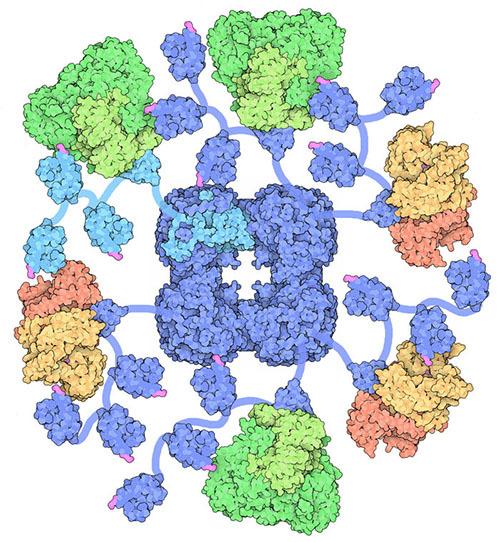 生きた細胞の中のたんぱく質の構造を解析する技術