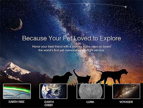 世界初、ネコの宇宙葬