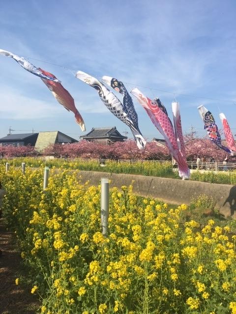 2019.3.6河津桜④