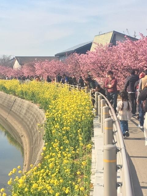 2019.3.6河津桜⑤