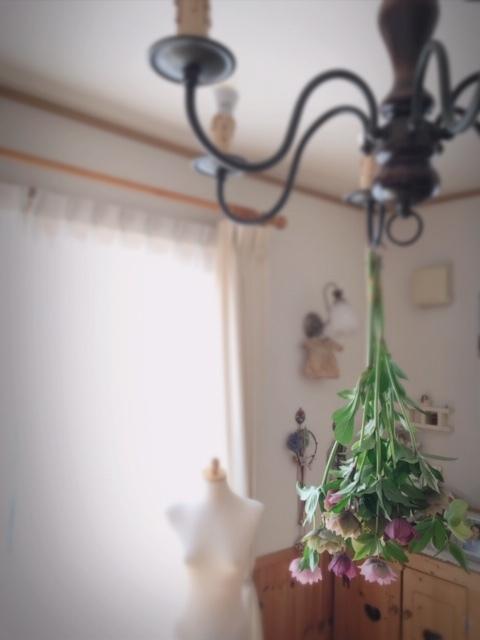 2019.4.4クリスマスローズ①
