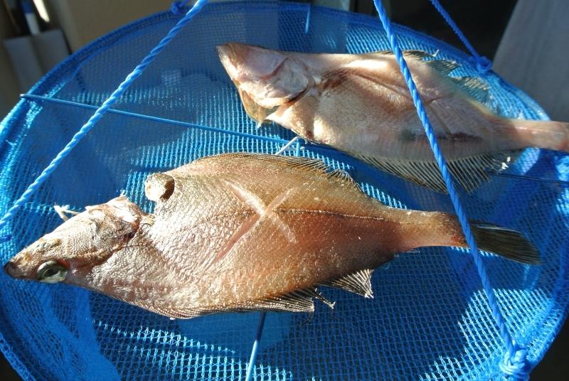 flounder-2.jpg