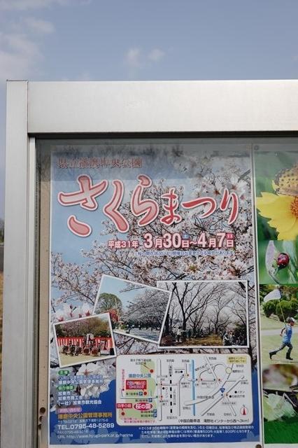 20190407 播磨中央公園 桜 (2)