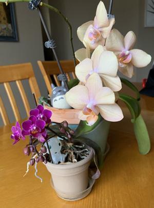 orchid04051901.jpg