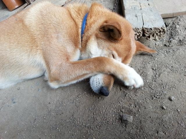 1ごめん犬
