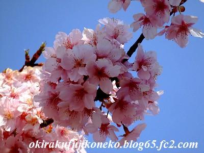 317桜6
