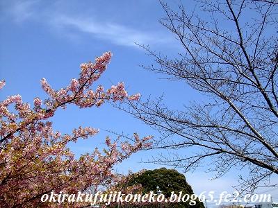 317桜8