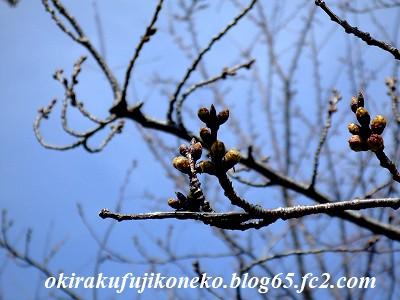 317桜9