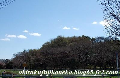 324桜2