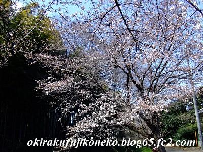324桜7