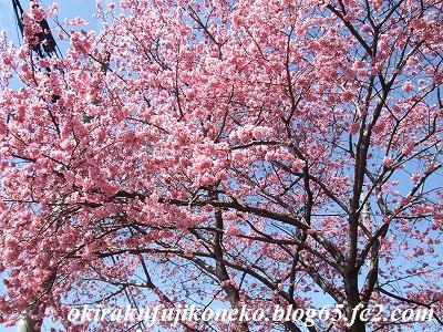 324桜9