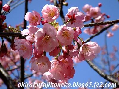 324桜11