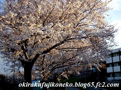 331見沼桜3