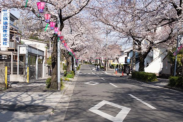 大森八剱神社南桜