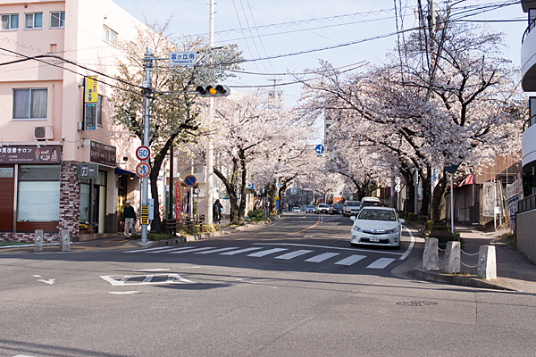 藤が丘南交差点桜