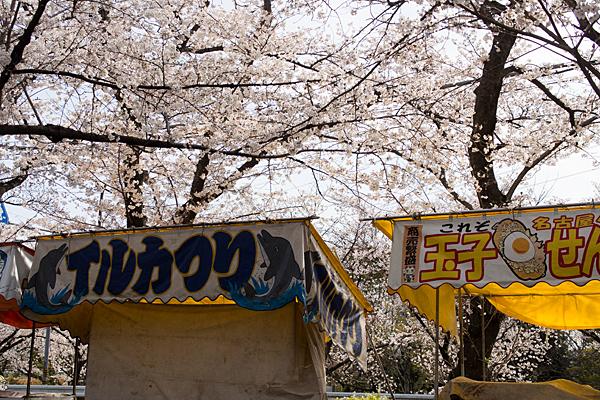 雨池公園屋台と桜