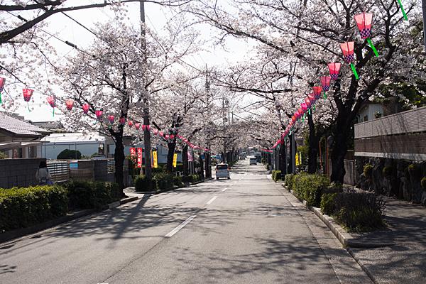 森孝八劔神社通り桜