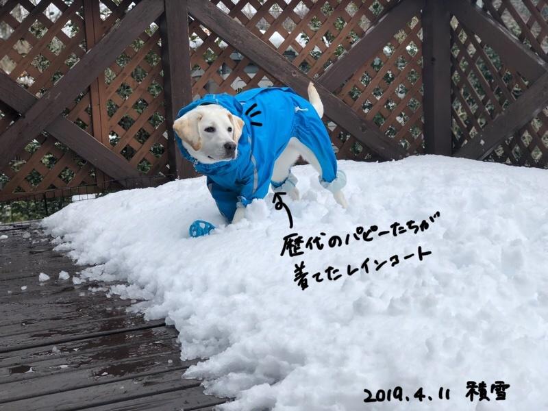雪の上でおもちゃを探してるフルート