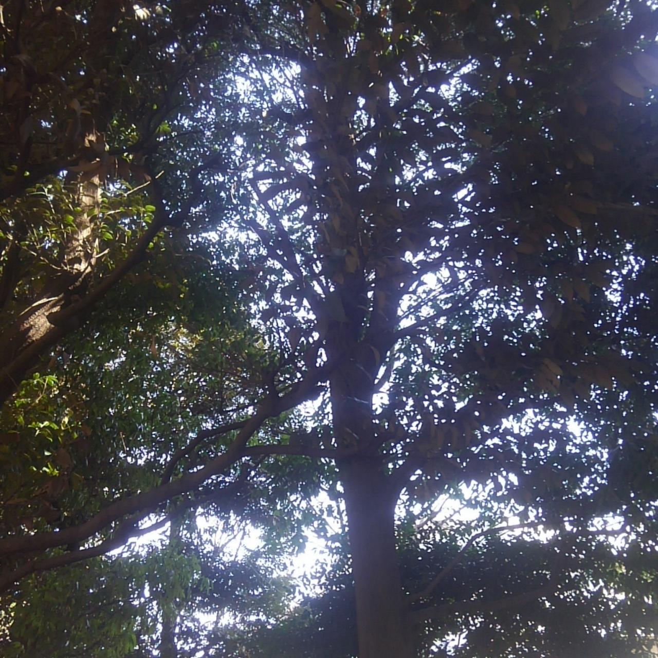 森林浴11