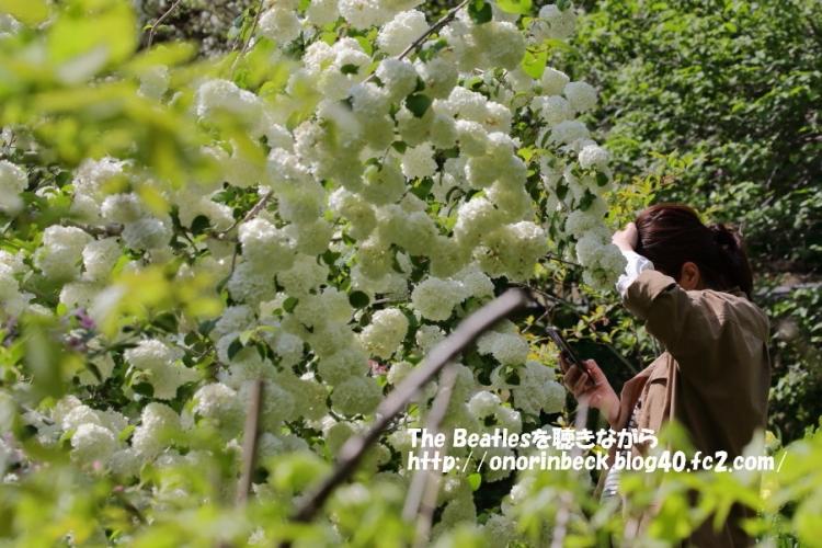 ハンカチの木の花とか。。。。@茂原牡丹園
