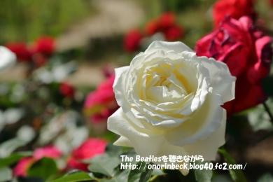 IMG_2019_05_19_9999_46.jpg