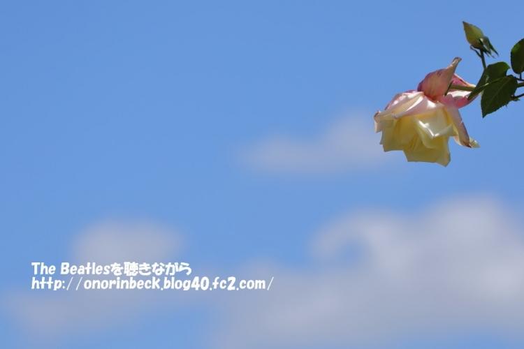 くさぶえの丘の春バラ(前編)@佐倉