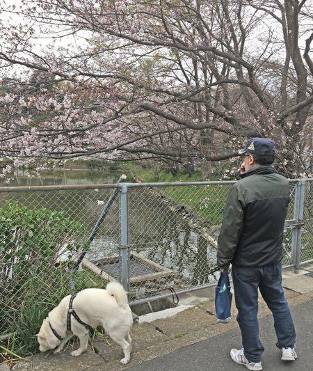 2019桜-4