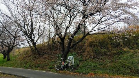 エノボクの桜も曇天だと映えない