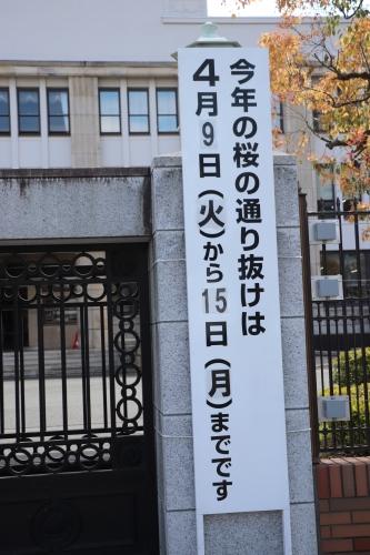 造幣局桜通り抜け