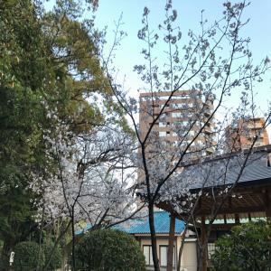 ブログ 桜_convert_20190410161329