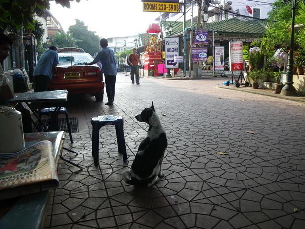 朝 宿の前の屋台にて 犬はどいつもおとなしくてかわいい_サイズ変更