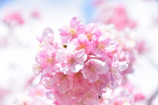春風吹けば(後編)