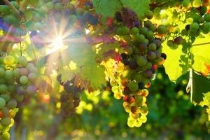 grapes-3550729__340.jpg