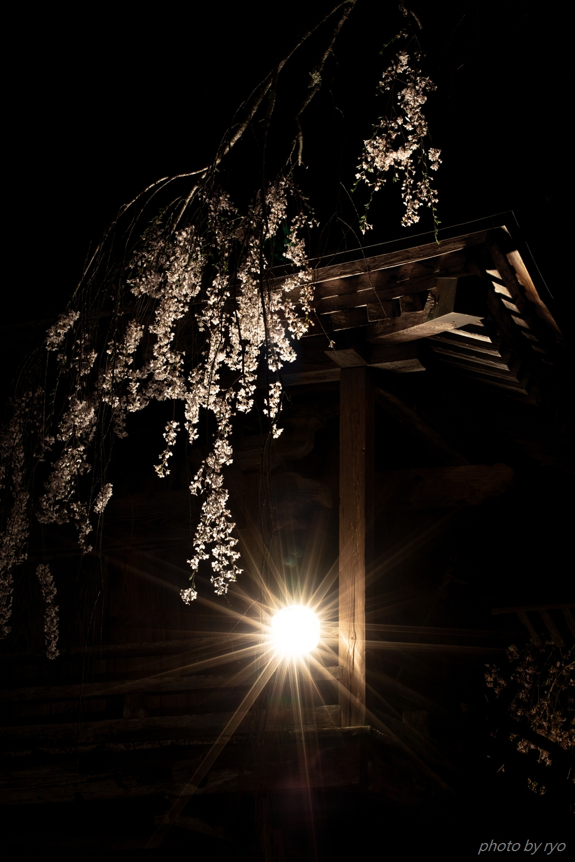 円正寺のしだれ桜 2019_1