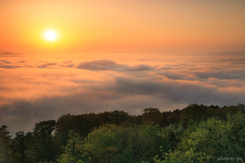 新緑の霧の海_4