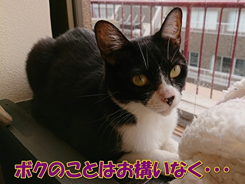 0616okamainaku.jpg