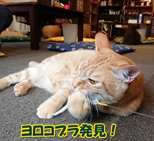 0616yorokobura.jpg