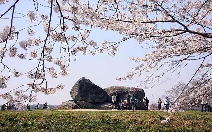 石舞台古墳 桜4