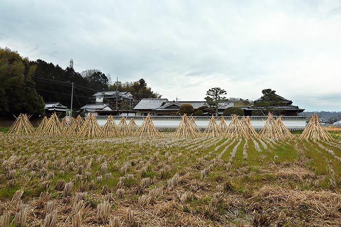 高山 竹の寒干し1