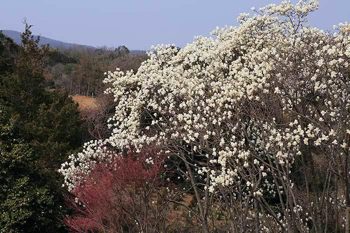 平群 里山の花木2