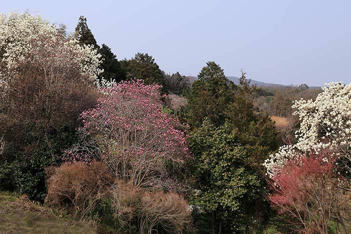 平群 里山の花木3
